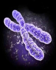 genetics-and-epigenetics